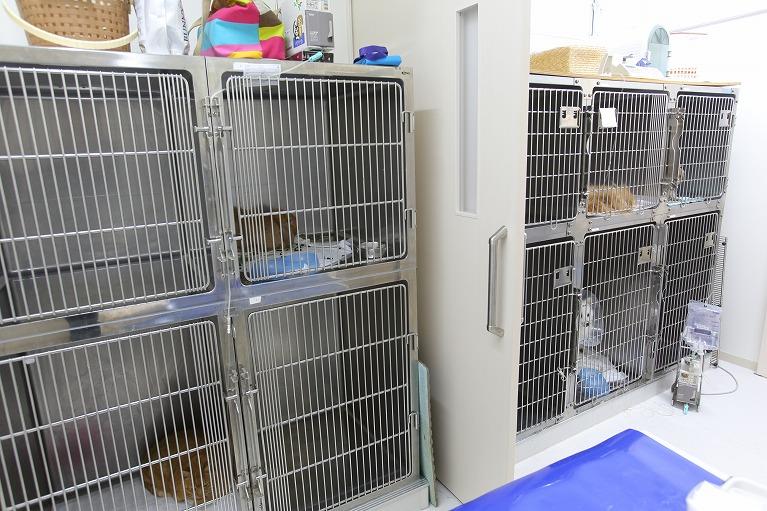 犬専用入院室・猫専用入院室