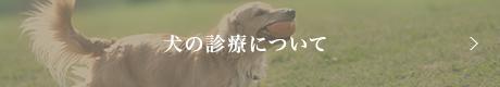 犬の診療について