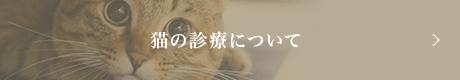 猫の診療について